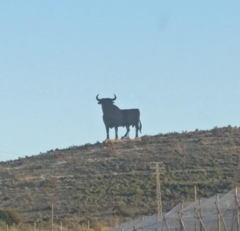 Toro Bravo Spanish Bull Symbol
